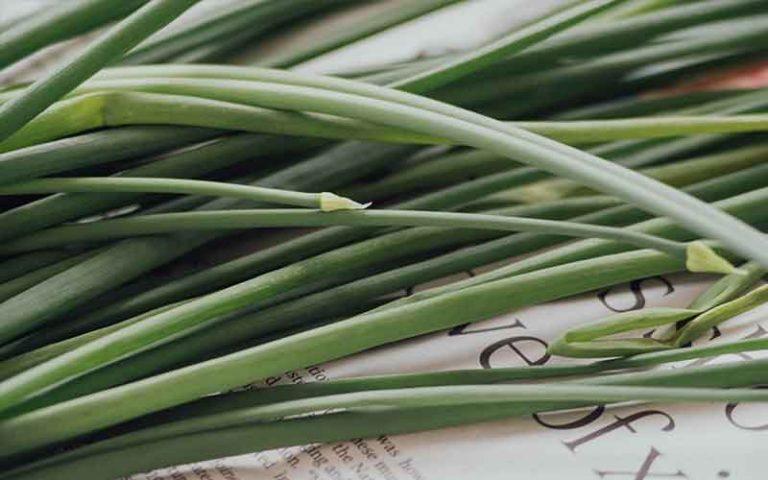 Lemon-Grass-oil
