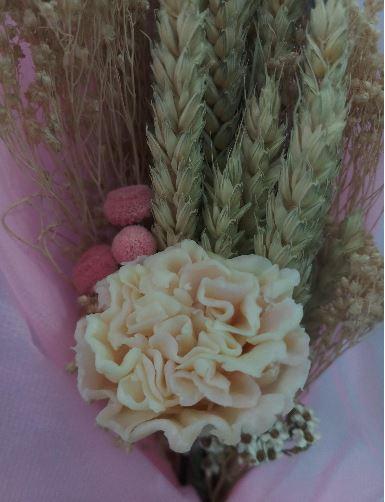 carnation-6